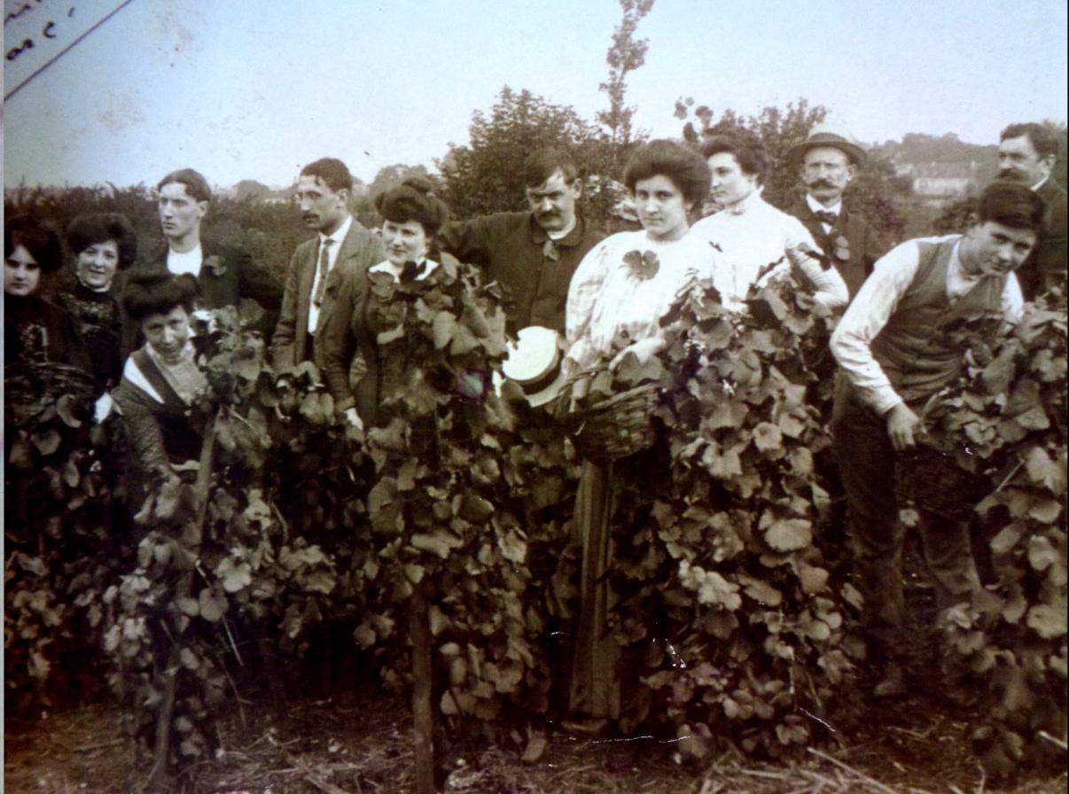 Les vendanges à Châtillon chez Valentin Goudou, 1908, photographie